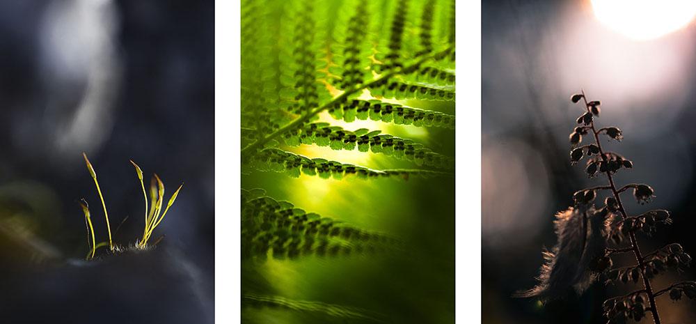 Ma passion pour la macrophotographie. Tryptique photographique de nature.