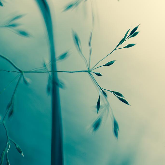 Ma passion pour la macrophotographie. Photo onirique d'une herbe folle.