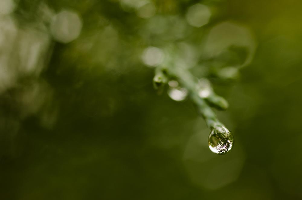 Ma passion pour la macrophotographie. Photo de goutte prête à tomber. Reflet dans la goutte.