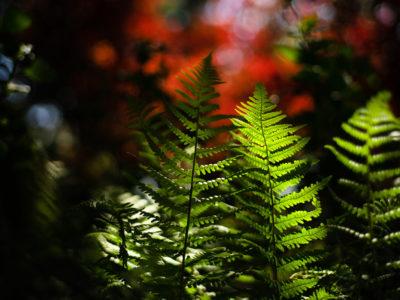 L'art d'associer la photographie à l'écriture : loop de L'Ame vagabonde. photographie de la nature sur le thème de la résilience.