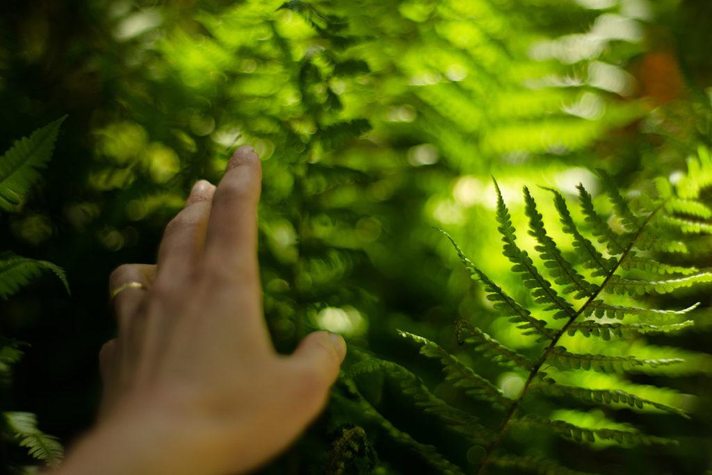 L'art d'associer la photographie à l'écriture : le loop de L'Ame Vagabonde. Autoportrait dans la nature sur le thème de la résilience.