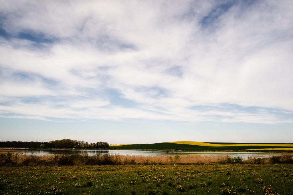 Weekend touristique et retrouvailles entre amis dans la Marne. Vue de la campagne avec les champs de colza et un étang au loin.