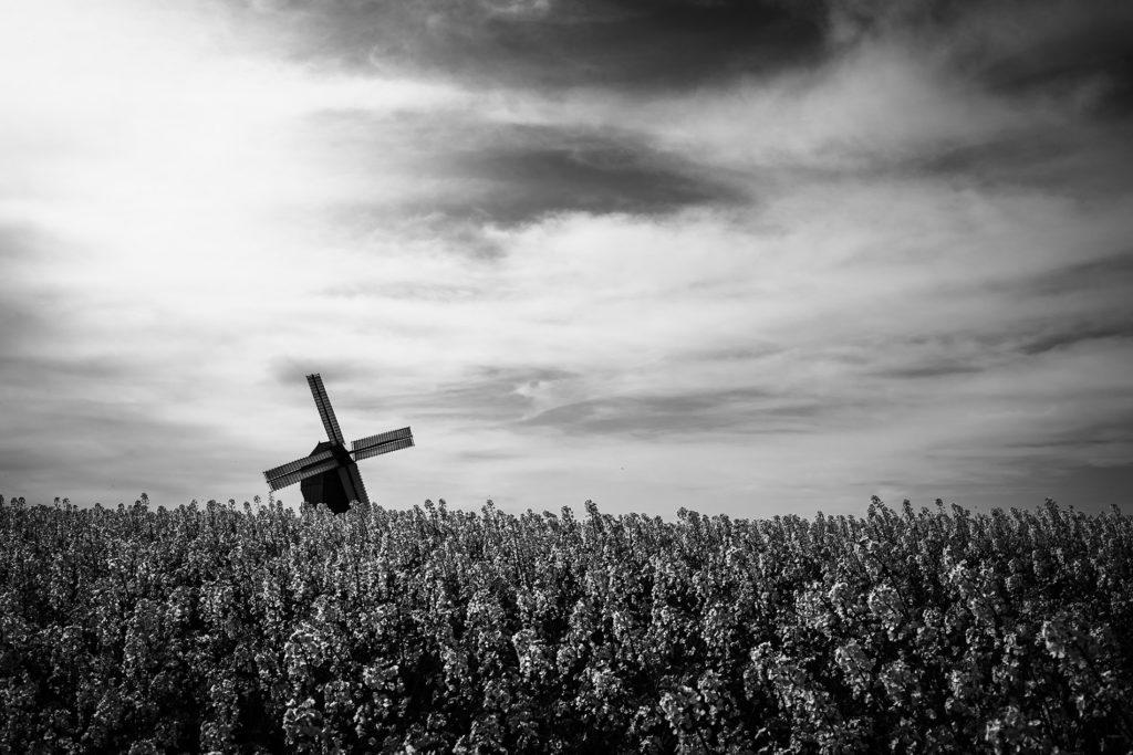 Weekend touristique et retrouvailles entre amis dans la Marne. Vue du moulin de Valmy depuis les champs de colza, en noir et blanc.