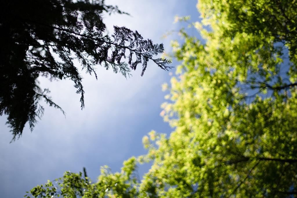 Photographier la nature. Photographie d'arbres et d'un bout de ciel.