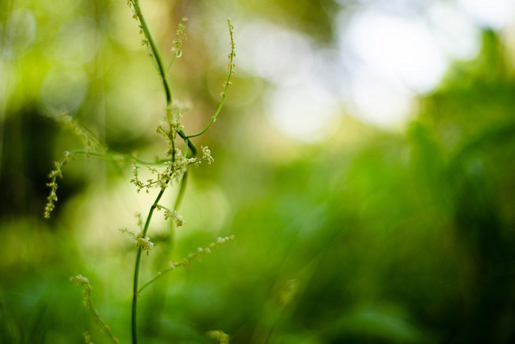 Photographier la nature. Photographie d'une herbe en faible profondeur de champ.