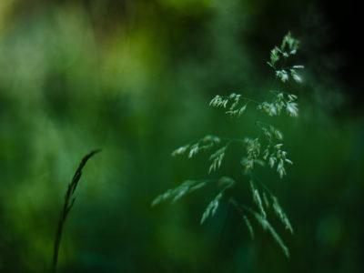 Photographier la nature dans son jardin.