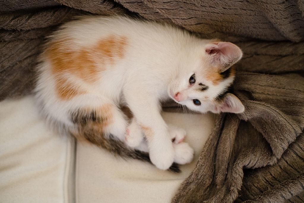Projet photo, le loop de L'Ame Vagabonde. Portrait d'un chaton sur un canapé.
