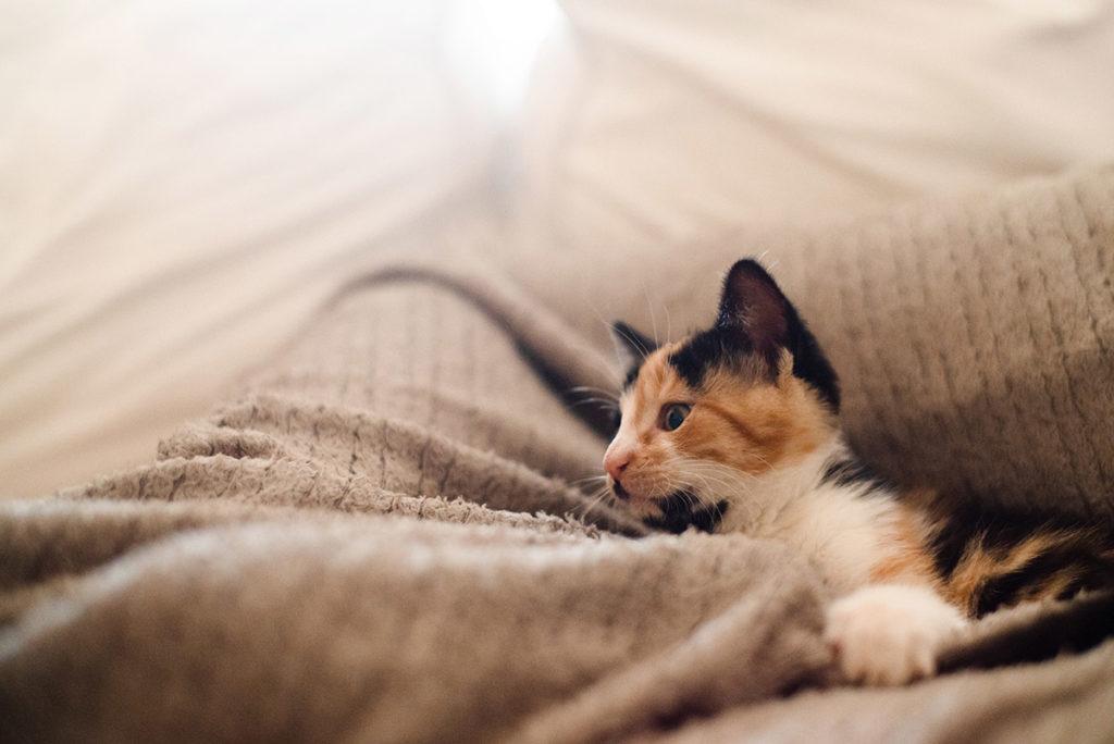 Projet photo, le loop de L'Ame Vagabonde. Portrait d'un chaton avec une douce lumière.