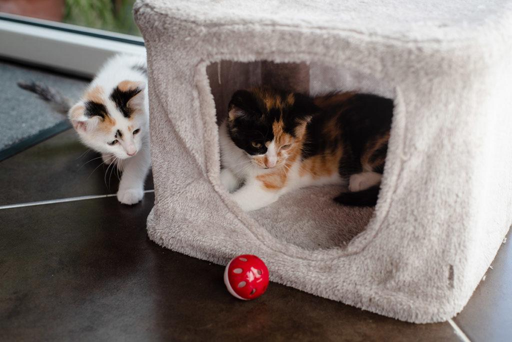 Projet photo, le loop de L'Ame Vagabonde. Jeux entre deux chatons.