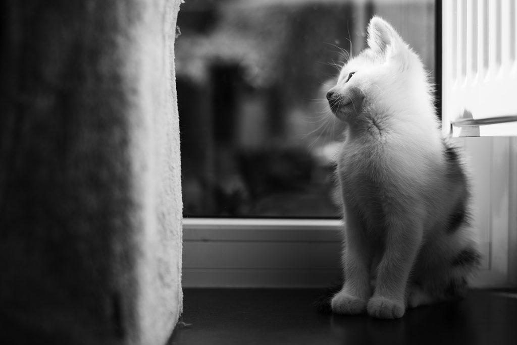 Projet photo, le loop de L'Ame Vagabonde. Portrait en noir et blanc d'un chaton.