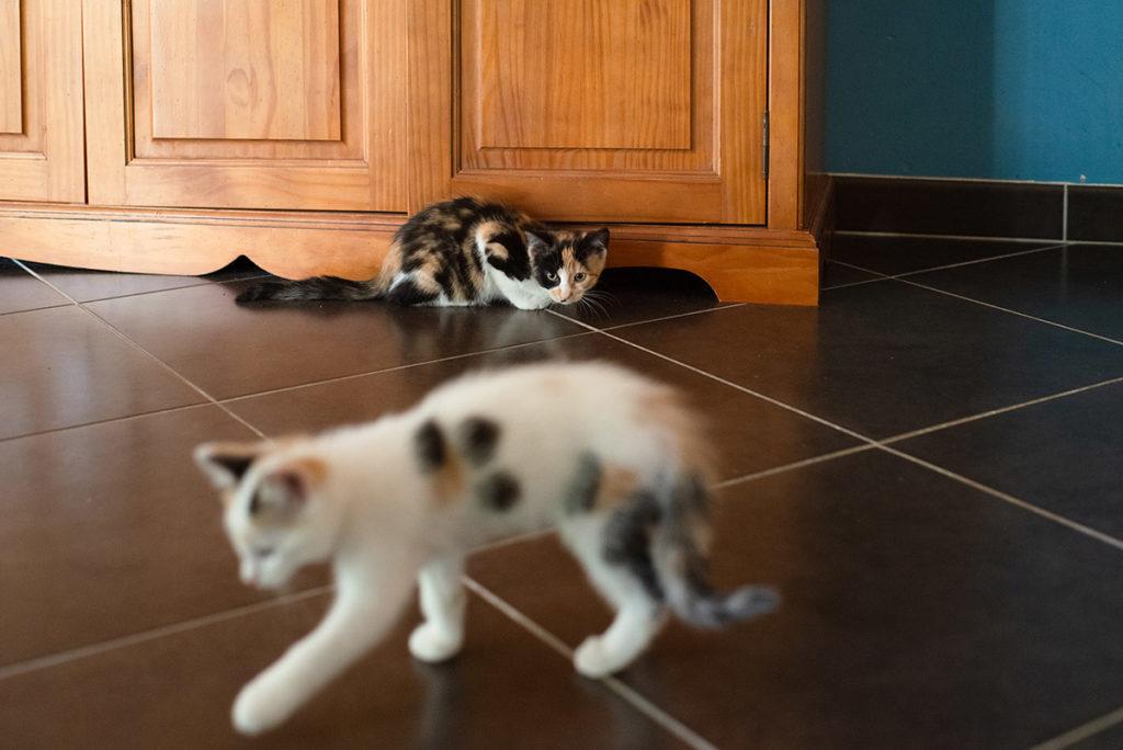 Projet photo, le loop de L'Ame Vagabonde. Rencontre entre deux chatons