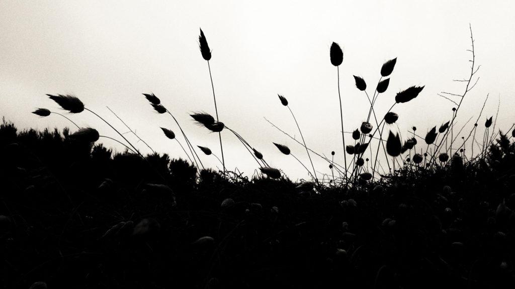 Photographe, apprendre à lâcher prise. Herbes folles dans les dunes. Noir et blanc.