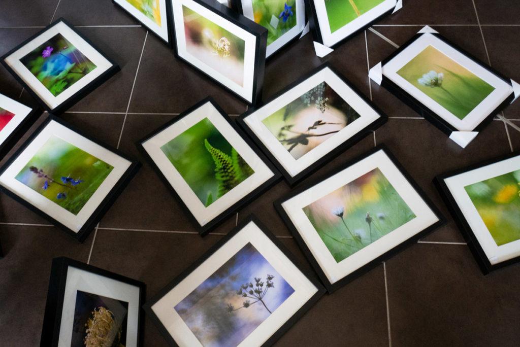 Formation à la macrophotographie avec le CPIE Mayenne. Photographie des photos utilisées pour l'exposition de macrophotographie à Lassay-les-Châteaux en 2018.