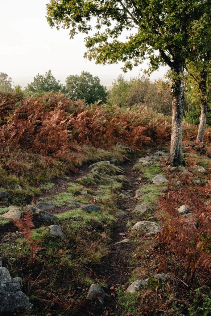 Sortie nature à la chapelle du Montaigu, en Mayenne. Photographie d'un sentier rocailleux descendant depuis le site de la Chapelle de Montaigu.