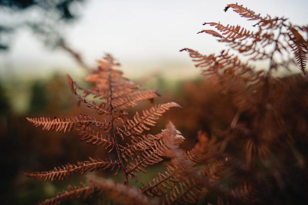 Sortie nature à la chapelle du Montaigu, en Mayenne. Photographie d'une fougère en parure d'automne.