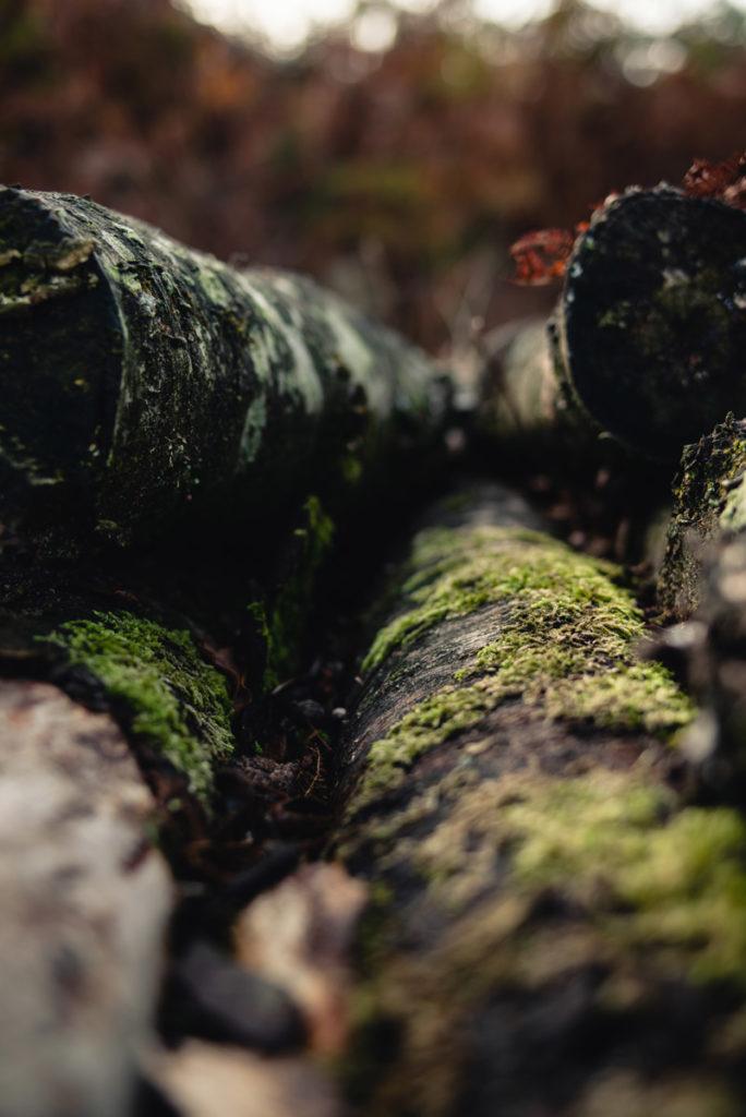 Sortie nature à la chapelle du Montaigu, en Mayenne. Photographie de mousse sur des rondins de bois.