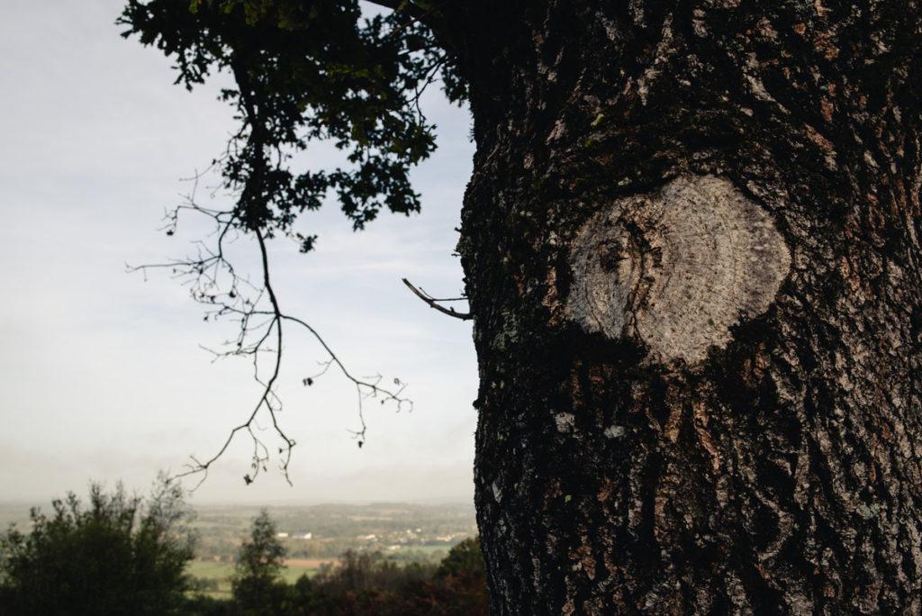 Sortie nature à la chapelle du Montaigu, en Mayenne. Détail d'une coupe de branche sur un arbre avec le paysage en fond.