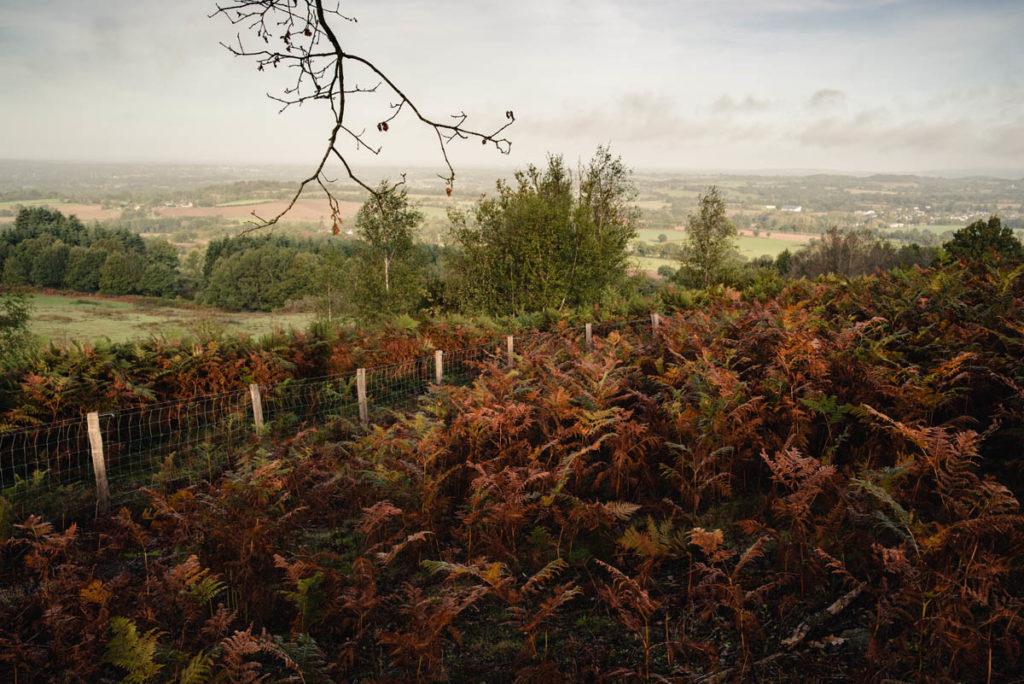Sortie nature à la chapelle du Montaigu, en Mayenne. Paysage de bocage mayennais avec champ de fougères en premier plan.