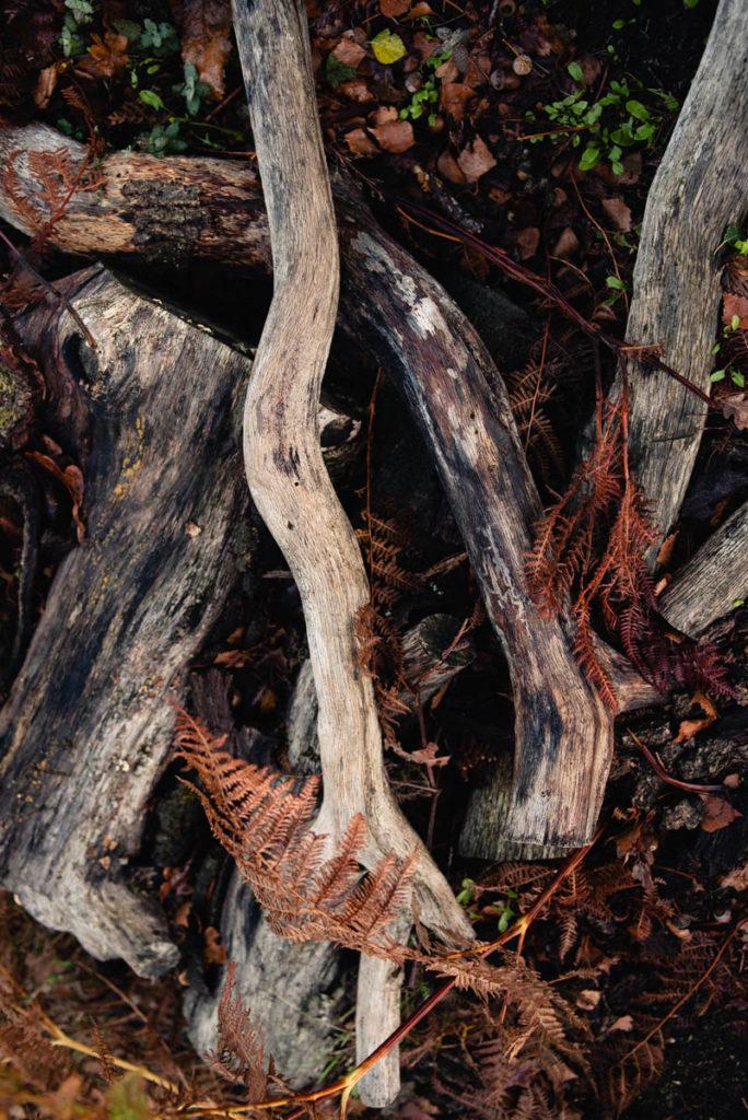 Sortie nature à la chapelle du Montaigu, en Mayenne. Photographie de bois patiné par les intempérie, contrastes avec le roux des fougères.