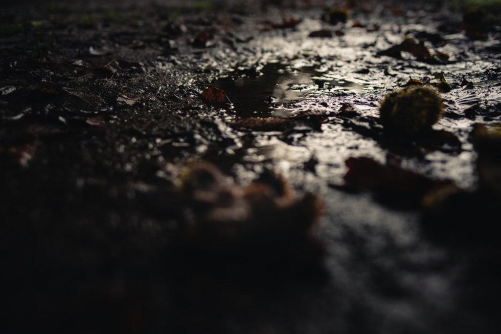 Sortie nature à la chapelle du Montaigu, en Mayenne. Vue très sombre d'un reflet dans une flaque en faible profondeur de champ. On devine des châtaignes au sol au premier plan.