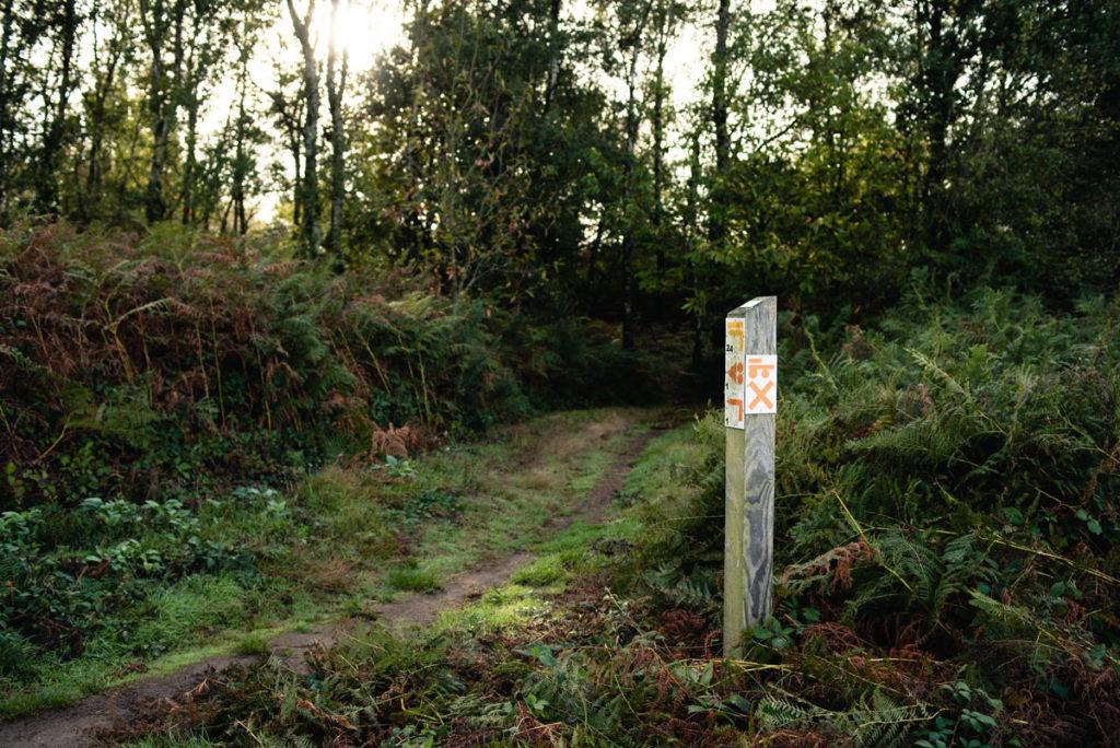 Sortie nature à la chapelle du Montaigu, en Mayenne. Vue du début de sentier de randonnée sur le site du Montaigu.