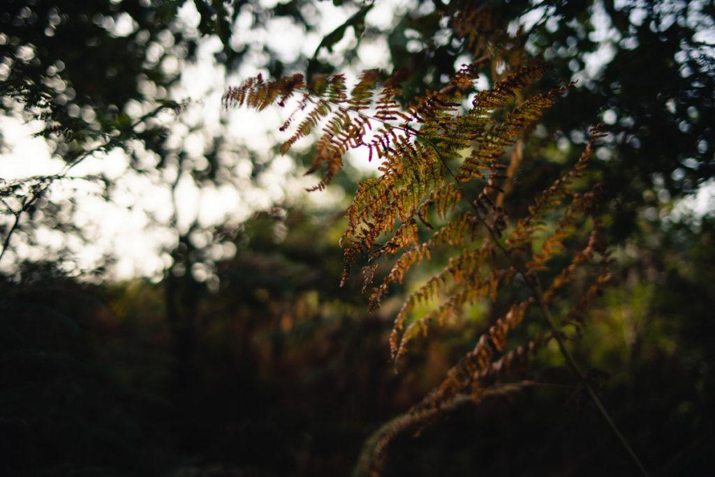 Sortie nature à la chapelle du Montaigu, en Mayenne. Fougère en très faible profondeur de champ dans les sous bois.