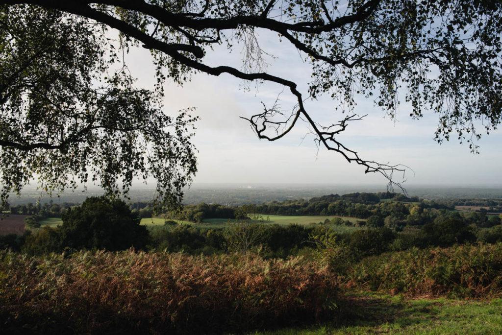 Sortie nature à la chapelle du Montaigu, en Mayenne. Vue du paysage encadrée par les branches d'un arbre.