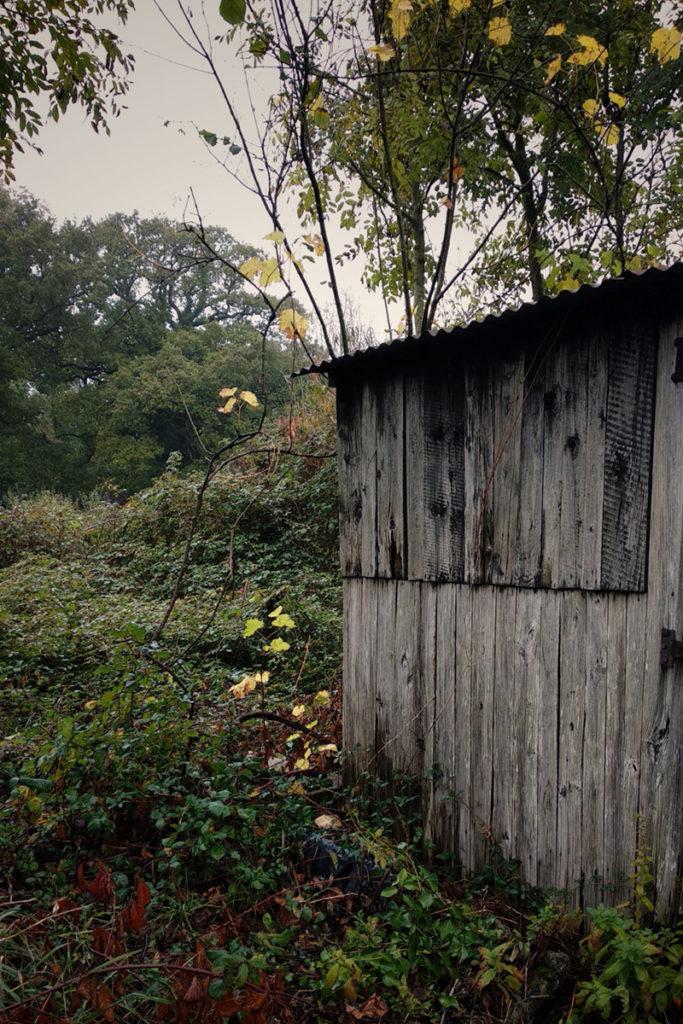 Formation à la macrophotographie avec le CPIE Mayenne. Photographie d'un cabanon de jardin à Fontaine Daniel en Mayenne. Cabanon envahi par la végétation.