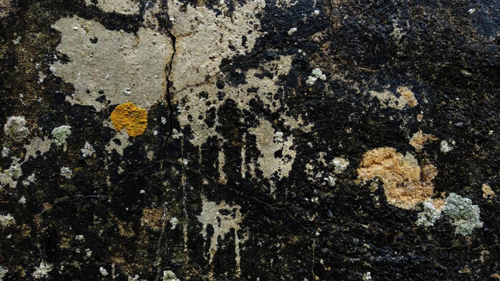 Formation à la macrophotographie avec le CPIE Mayenne. Photographie de détails, lichens sur la pierre formant un tableau abstrait. Fontaine Daniel, Mayenne.
