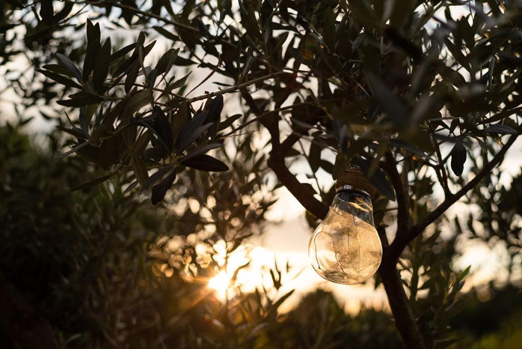 Et la lumière fut ! lumière à travers les oliviers au crépuscule.