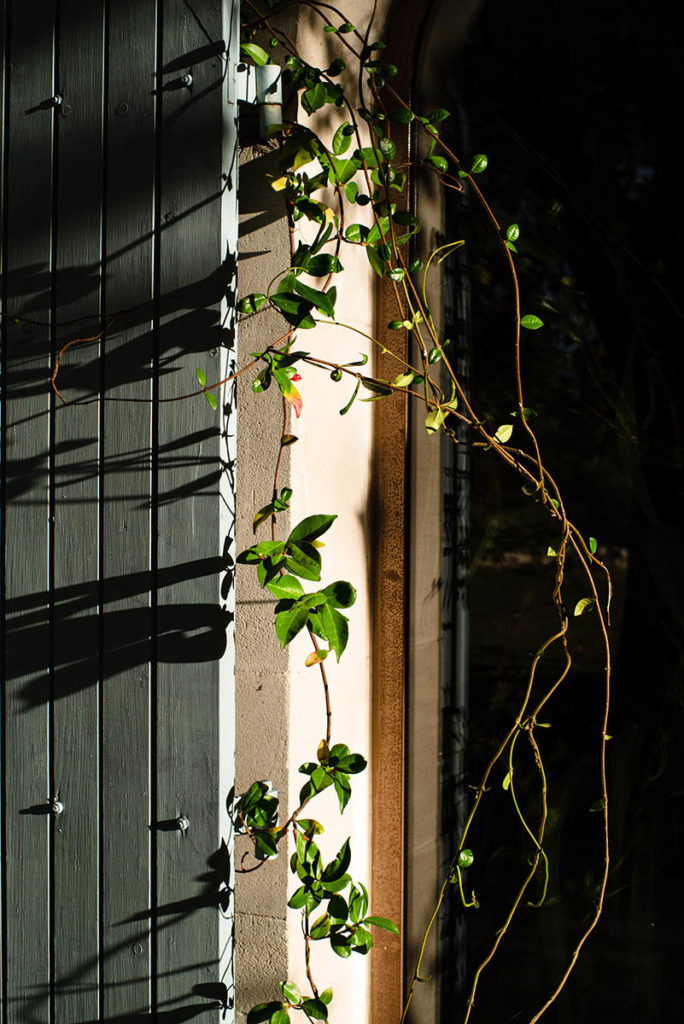 Et la lumière fut ! Plante grimpante sur un volet, ombre et lumière.