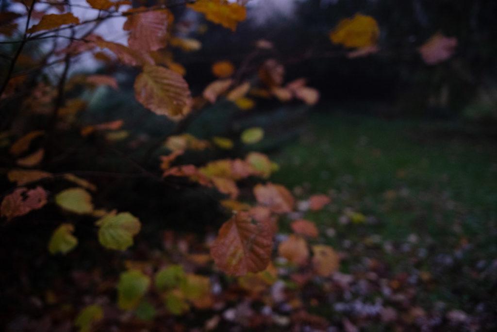 Quand je photographie mon jardin à la nuit tombée (et dans le brouillard) ! Photo floue d'un noisetier ! Les feuilles semblent en suspension dans les airs. Photographe Pascaline Michon.