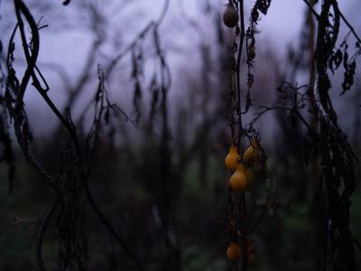 Quand je photographie mon jardin à la nuit tombée (et dans le brouillard) !