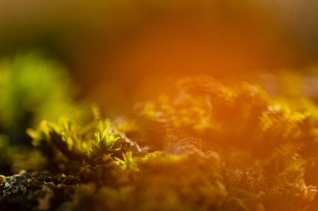 As-tu des idées pour mes prochains articles ? Macrophotographie artistique d'une mousse avec des halos de couleurs. Photographe Pascaline Michon.