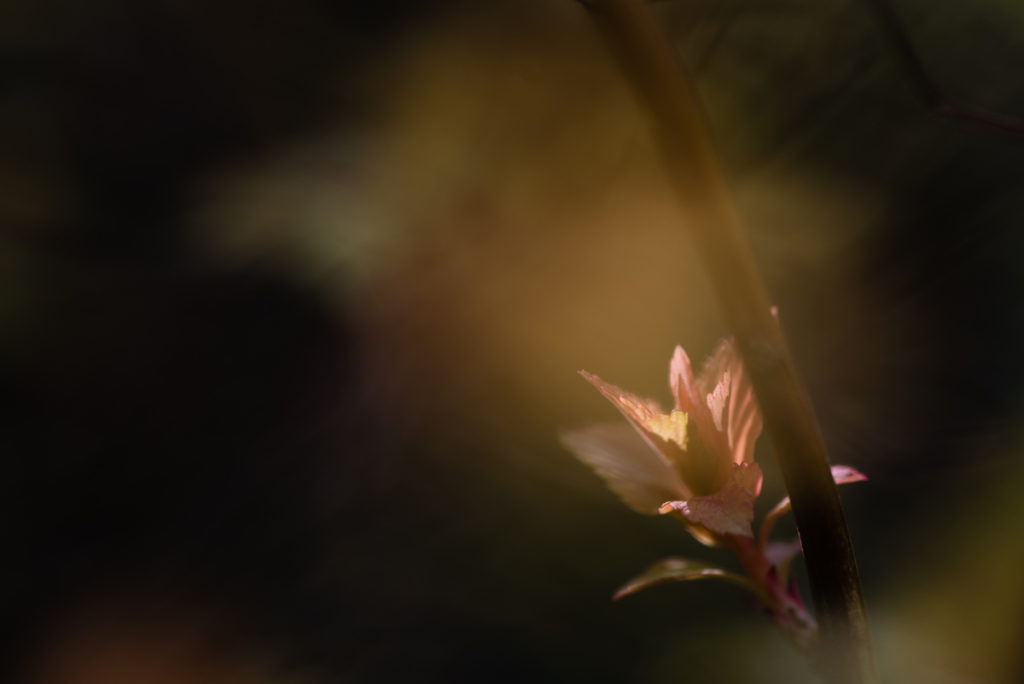 Macrophotographie au jardin.