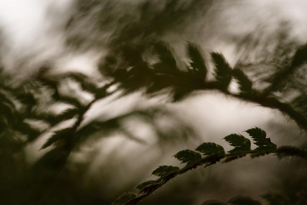 La photographie pour se reconnecter à ses ressentis. Photographie d'une fougère en contre-jour et en faible profondeur de champ.