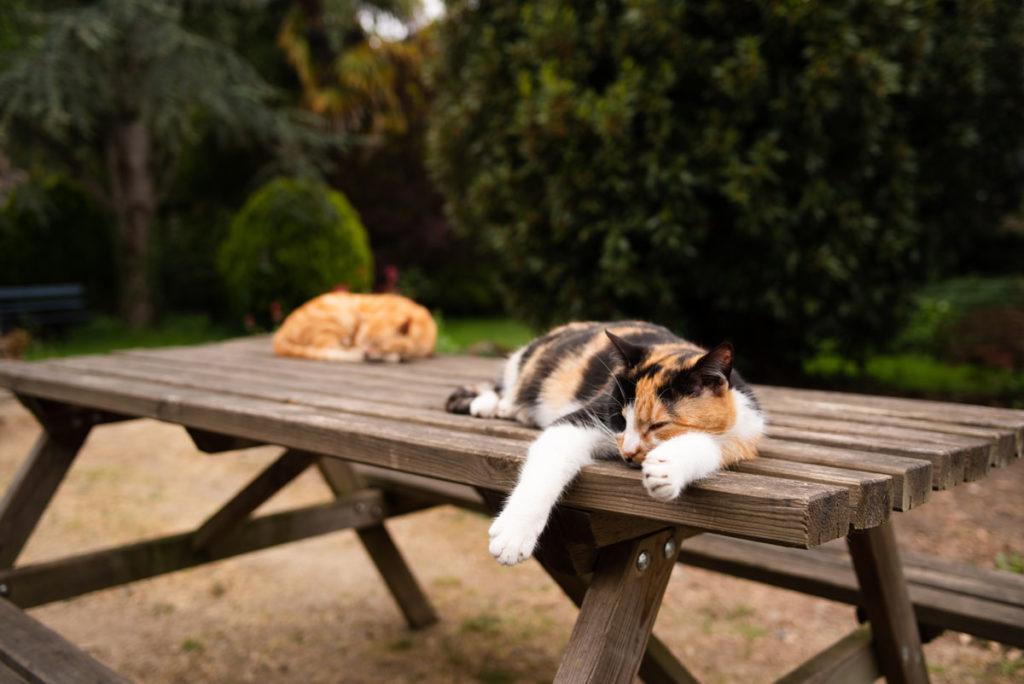 Deux chats dorment sur une table dehors.