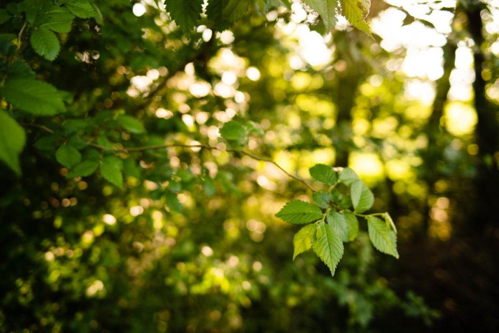 Soleil filtrant à travers les feuillages du jardin. Défi photo une journée de mon quotidien.