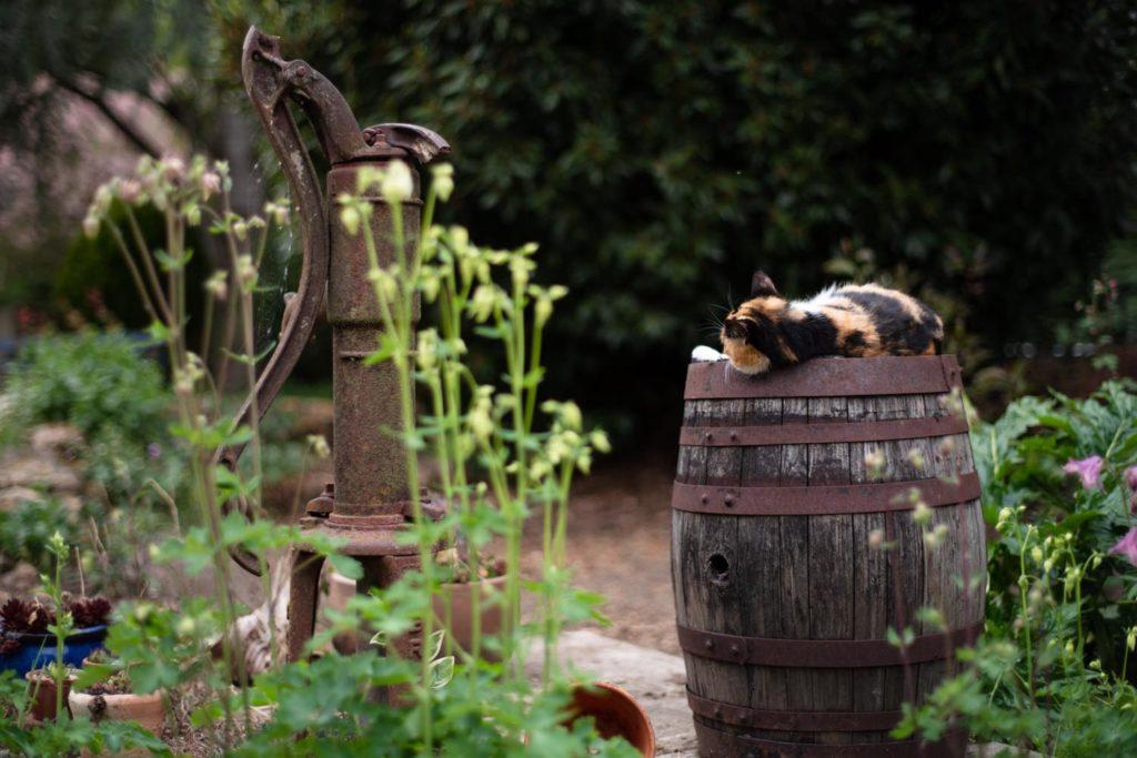 Une de mes valeurs phare : la simplicité. Le chat dort sur un tonneau dans le jardin. Eloge de la simplicité.